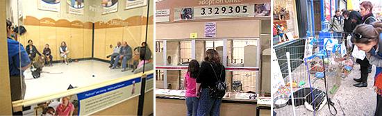 ▲店内で行われるトレーニングのクラス・猫の譲渡コーナー・譲渡イベントの様子