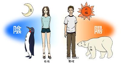 陰と陽の説明図