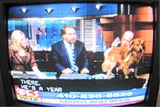 ▲生放送のニュース番組に設けられた保健所の動物を紹介するコーナー