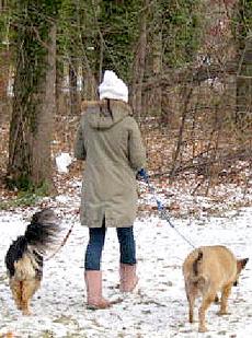 ▲天候にかかわらず犬には散歩を