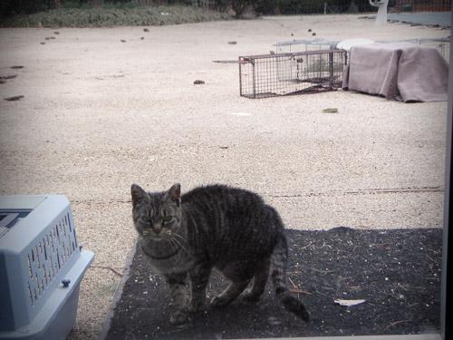 地域猫(TNR)